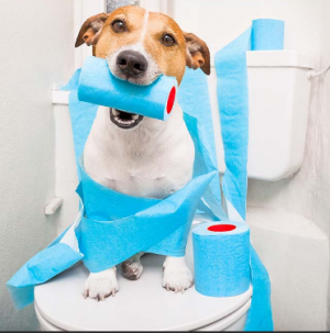 Natural Remedies for Dogs with Diarrhea