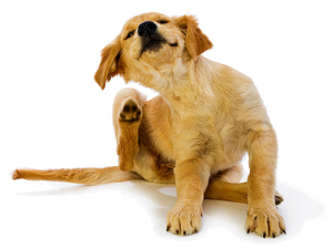 Natural Remedies for Dog Skin Allergies Itching